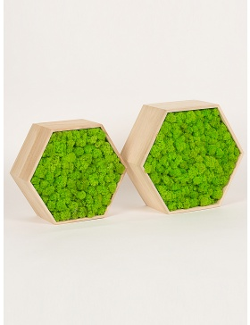 Preserved moss hexagon frame