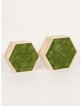 Preserved green moss hexagon frame