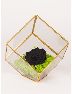 Preserved rose arrangement in cube shape terrarium
