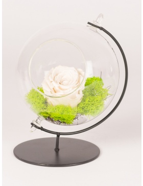 Preserved red rose in glass globe