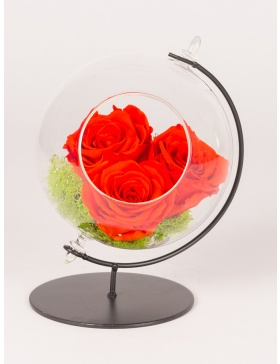 Preserved red roses in glass ball