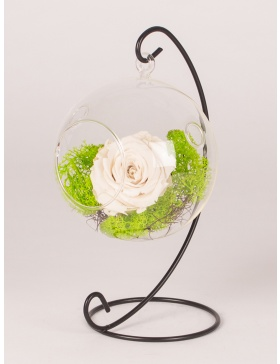 Preserved rose in hanged ball