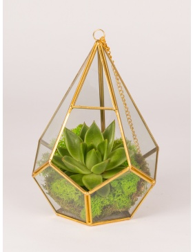 Plant in glass diamond terrarium