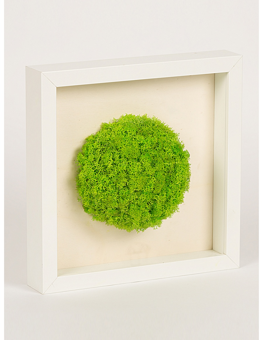 Frame with round shaped green moss