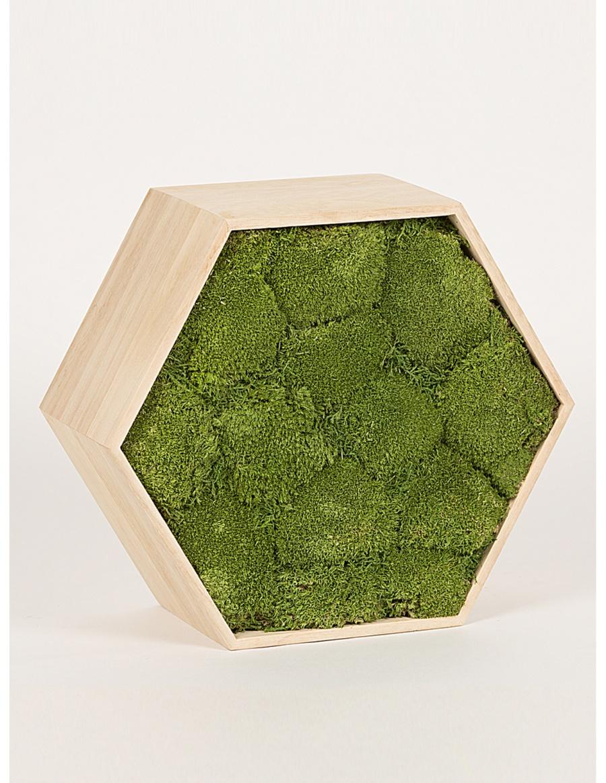 Preserved green moss hexagon frame