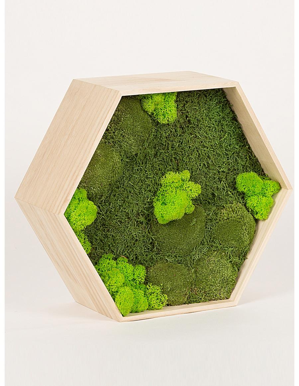 Preserved green moss hexagon frame 34cm