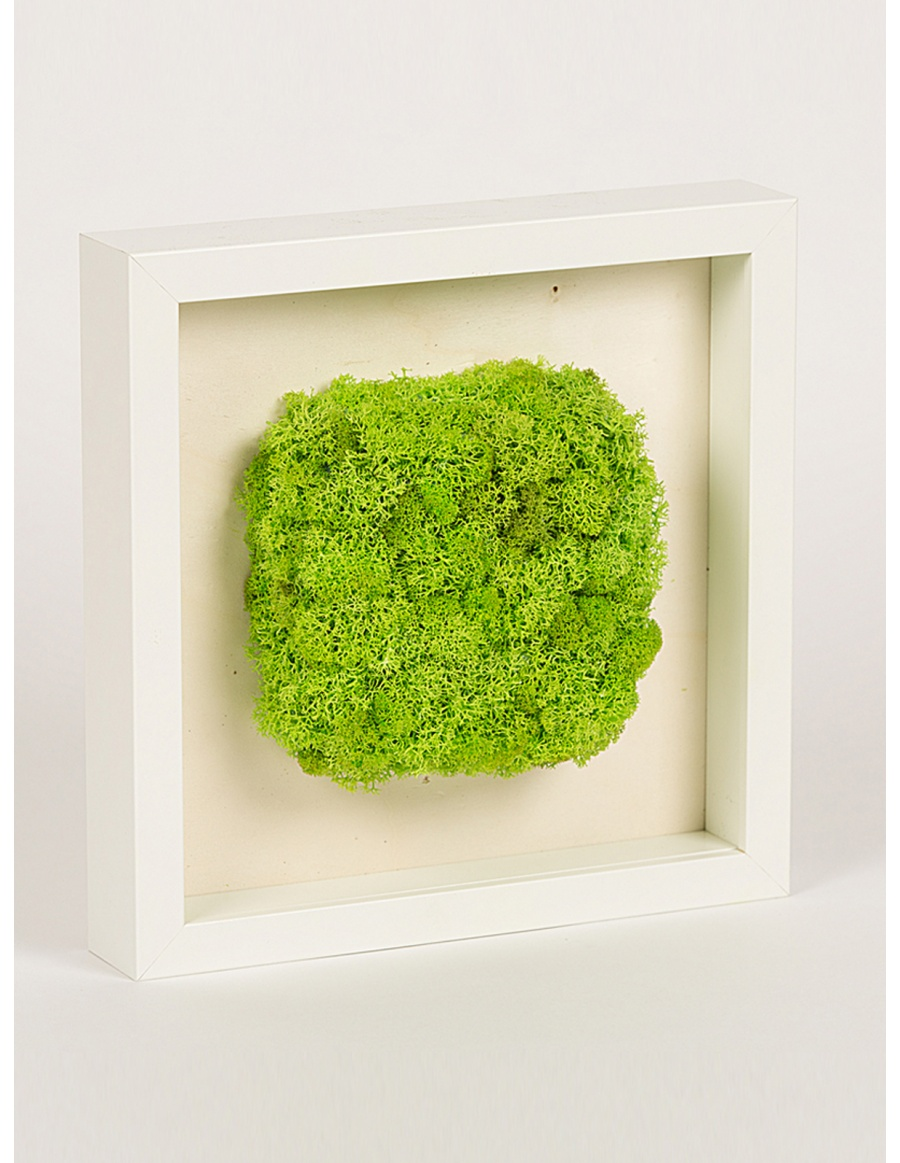 Frame with square shaped green moss