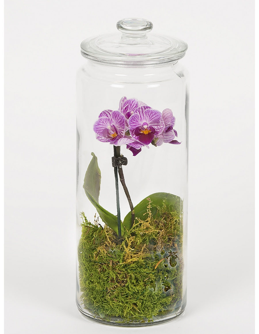 Orchid and green moss terrarium