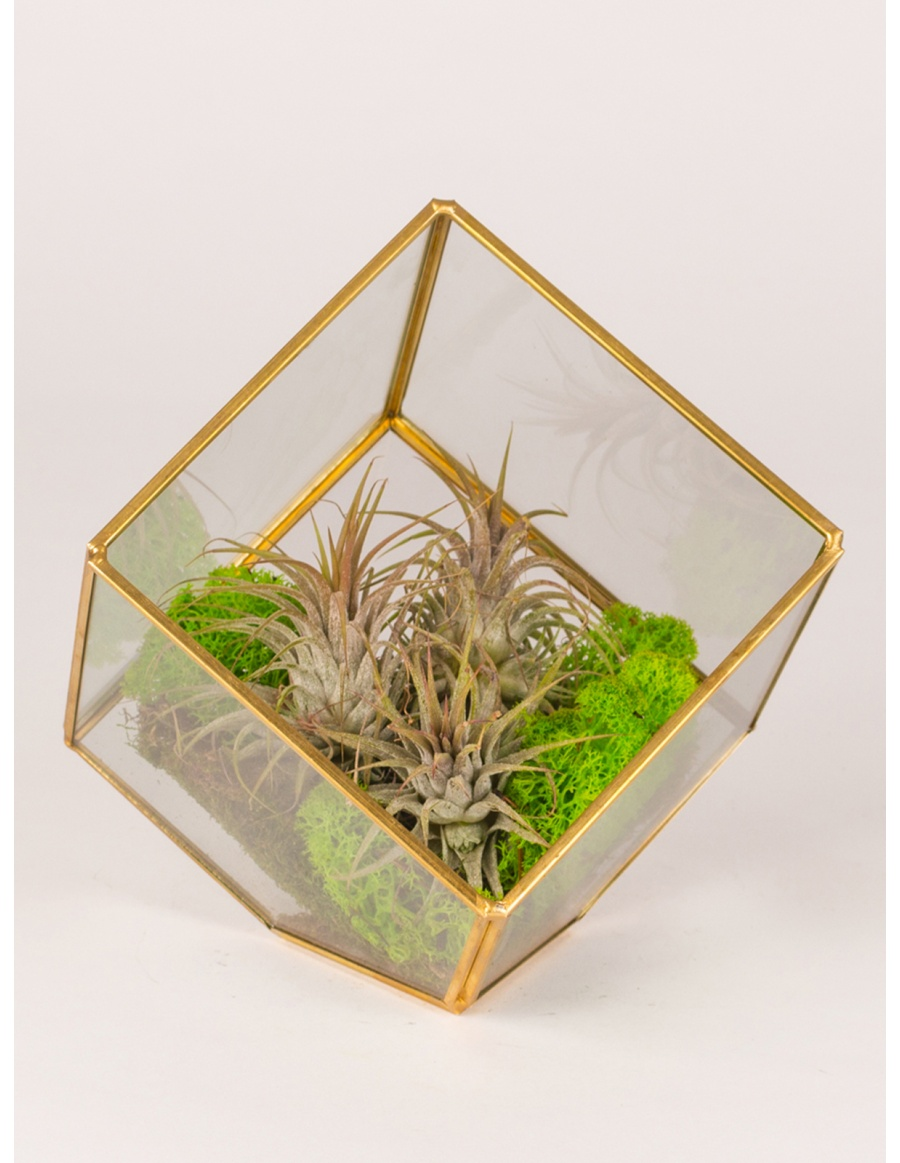 Plant in glass cube terrarium