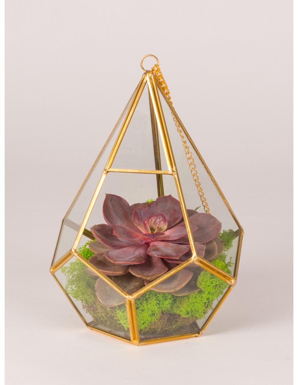 Plant in glass diamond terrarium