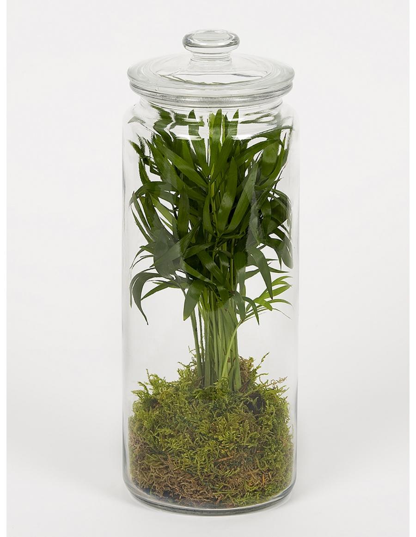 Green plant terrarium