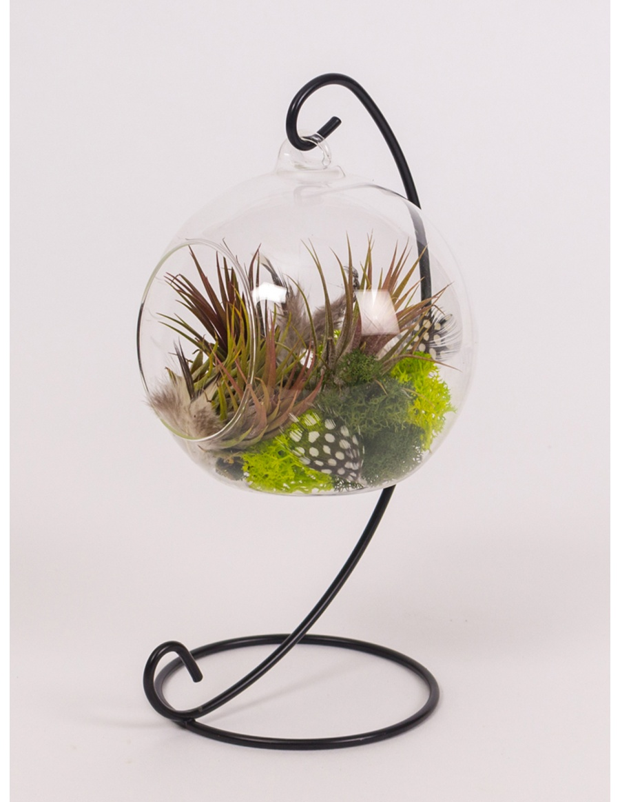 Airplants in hanged glass ball