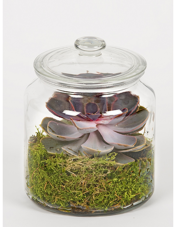 Green moss and echeveria terrarium