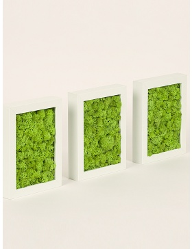 3 frames with preserved green moss set
