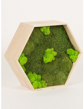 Preserved green moss hexagon frame 34cm