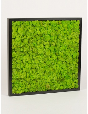 Black frame with preserved moss