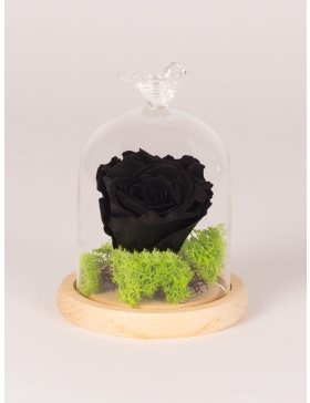 Preserved rose in small glass bell