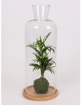 Glass bell h44cm with small palm tree