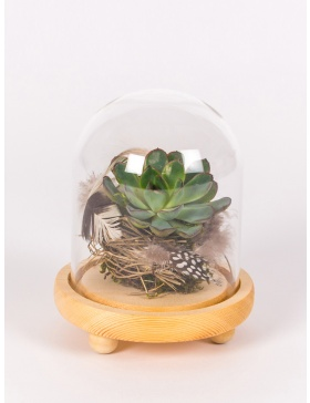 Succulent plant in glass bell with wooden base