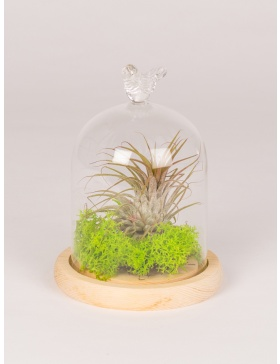 Plant in glass bell with wooden base