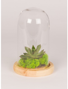 Glass bell with wooden base and  plant