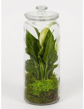 Flower plant terrarium