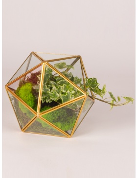 Plant in glass sphere terrarium