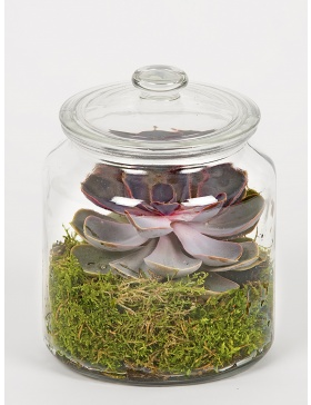 Green moss and echeveria terrarium