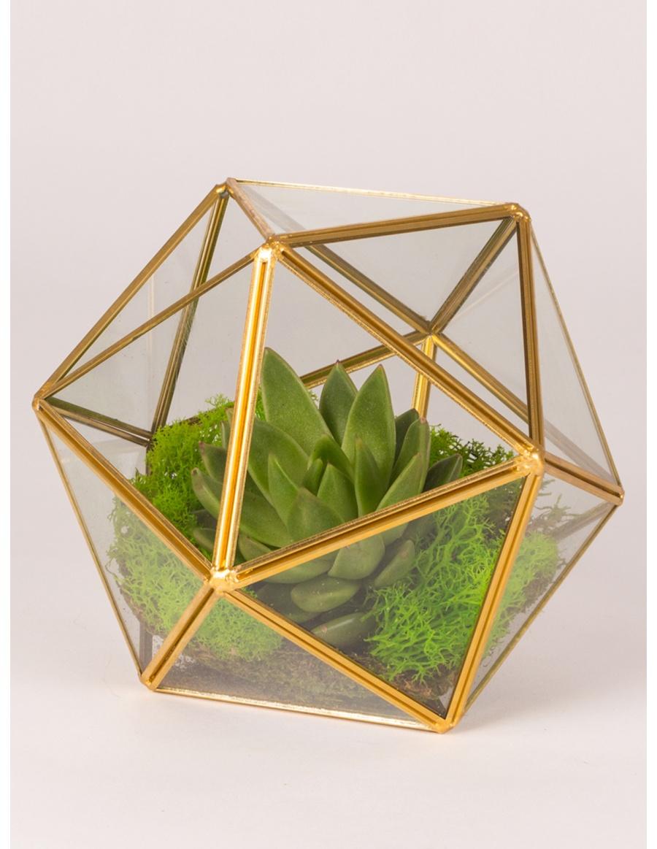 Plant In Glass Sphere Terrarium Purple Flowers Molecule F